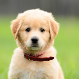 Cute Puppy Dogs Wallpaper