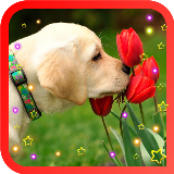 Labrador Retriever LWP