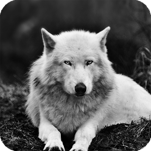 White Wolf Live Wallpaper HD